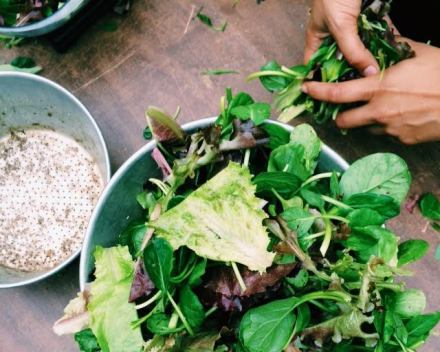 Lettuce from Flatbushfarmshare